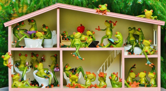 frogs-1382827_1920